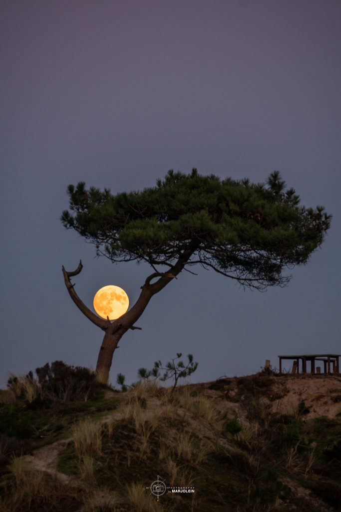 ©MarjoleinvRoosmalen maan met boom +LOGO Arjensduin Terschelling Groot